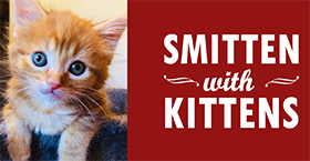 50% off kitten fees