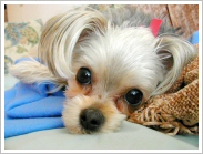 Animal Abuse & Violence | Wisconsin Humane Society