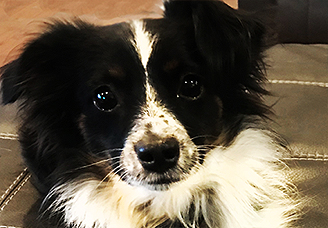 Services | Wisconsin Humane Society