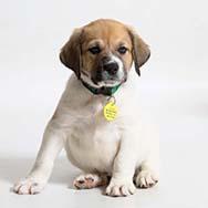 Dog Training Classes | Wisconsin Humane Society
