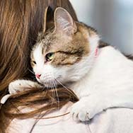 Training Your Cat To Stay Inside