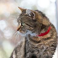 Bringing An Outdoor Cat Indoors Can Be Stressful Here Are Some Tips On Making It A Successful Transition